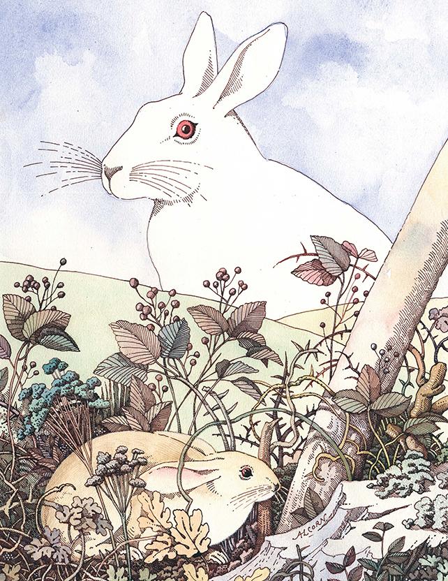 GreenBuilding-magazine-John-Alcorn_la-collina-dei-conigli