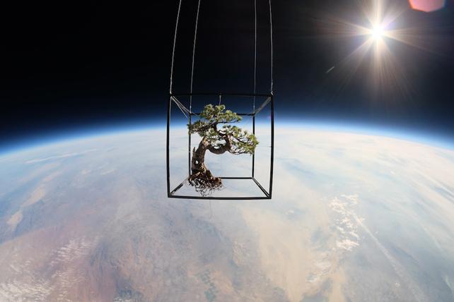 Exobiotanica – Botanical space flight, Black Rock Desert, Nevada, USA, 2014. © AMKK