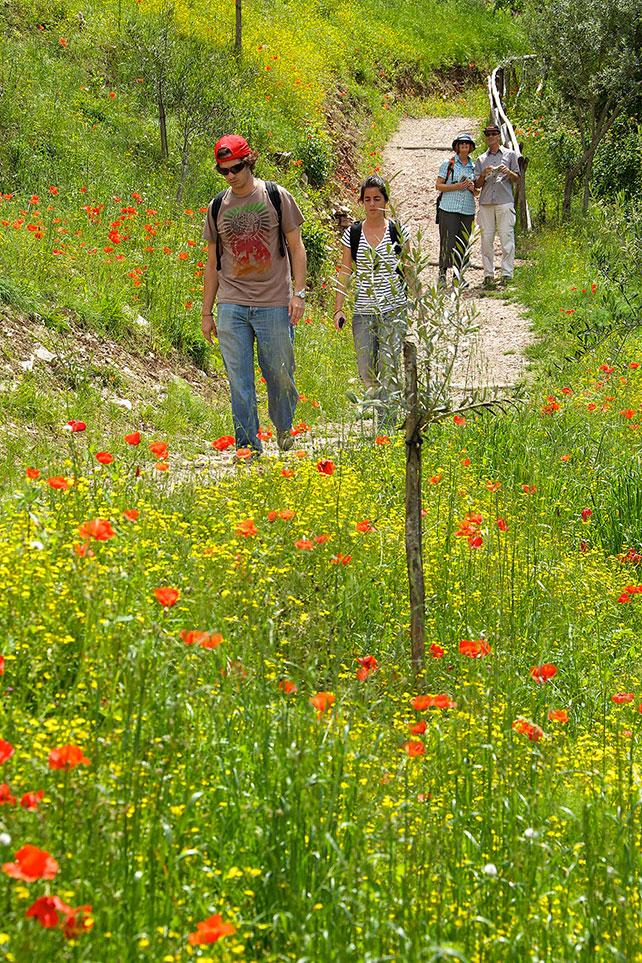GreenBuilding-magazine-Bosco-di-San-Francesco,-Assisi,-Andrea-Angelucci,-2013-©--FAI---Fondo-Ambiente-Italiano